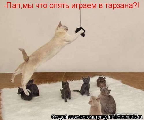 Котоматрица: -Пап,мы что опять играем в тарзана?!