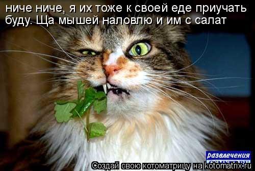 Котоматрица: ниче ниче, я их тоже к своей еде приучать буду. Ща мышей наловлю и им с салат
