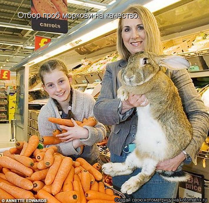 Котоматрица: Отбор проб моркови на качество.