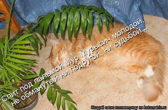 Котоматрица: Спит под пальмой Мур Мурысич молодой, не обманутый ни подругой, ни судьбой...
