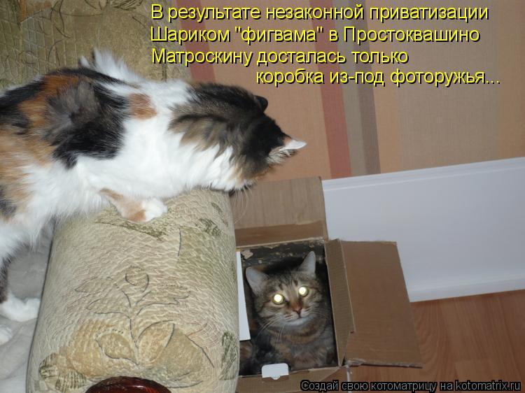 """Котоматрица: В результате незаконной приватизации  Шариком """"фигвама"""" в Простоквашино Матроскину досталась только коробка из-под фоторужья..."""