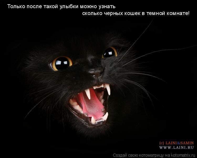 Котоматрица: Только после такой улыбки можно узнать  сколько черных кошек в темной комнате!