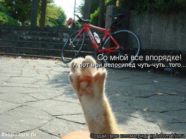 Котоматрица: Со мной все впорядке! А вот мой велосипед чуть-чуть..того...