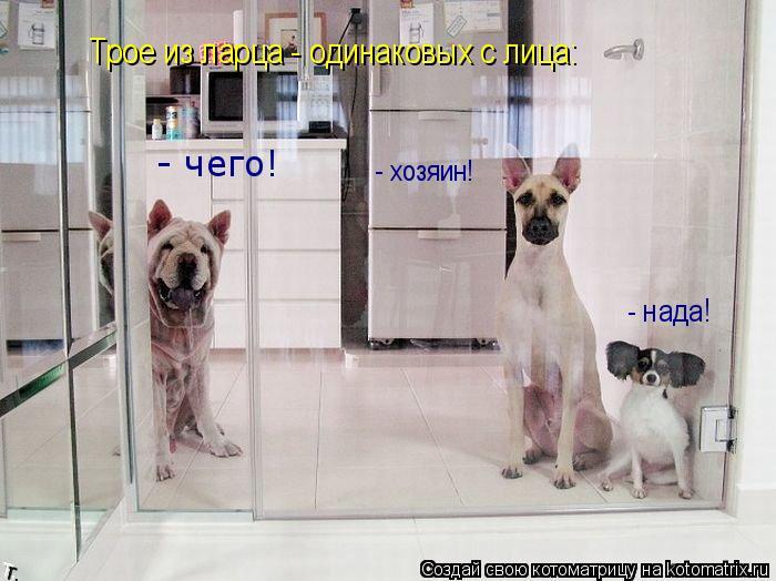 Котоматрица: Трое из ларца - одинаковых с лица: - чего! - хозяин!  - нада!