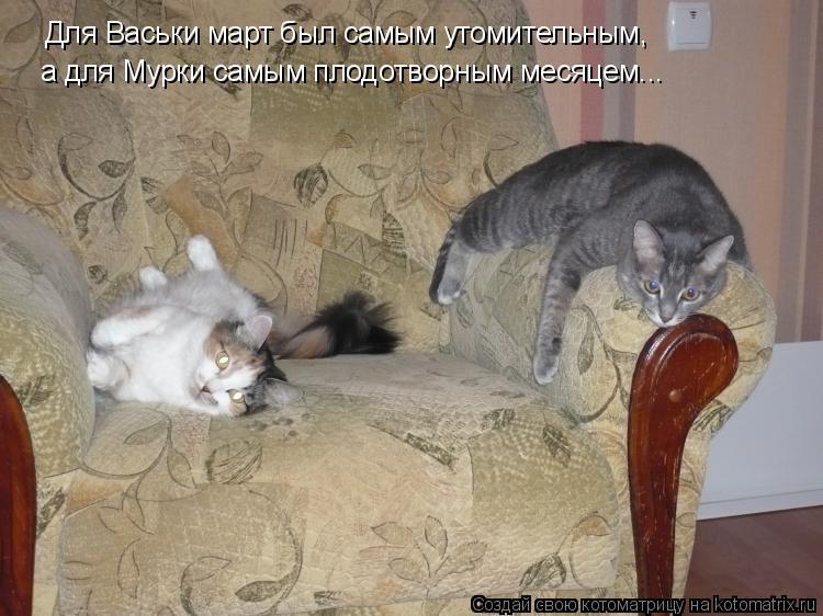 Котоматрица: Для Васьки март был самым утомительным, а для Мурки самым плодотворным месяцем...