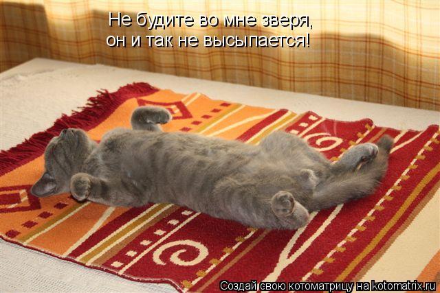 Котоматрица: Не будите во мне зверя, он и так не высыпается!