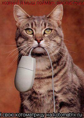 Котоматрица: хозяин! я мыш поймал, вискас гони! хозяин! я мыш поймал, вискас гони!