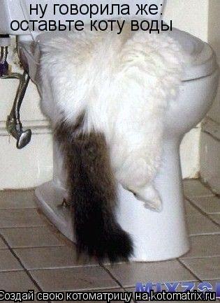 Котоматрица: ну говорила же: оставьте коту воды