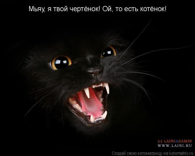 Котоматрица: Мьяу, я твой чертёнок! Ой, то есть котёнок!