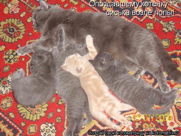Котоматрица: Опоздавшему котенку -  сиська возле попы!