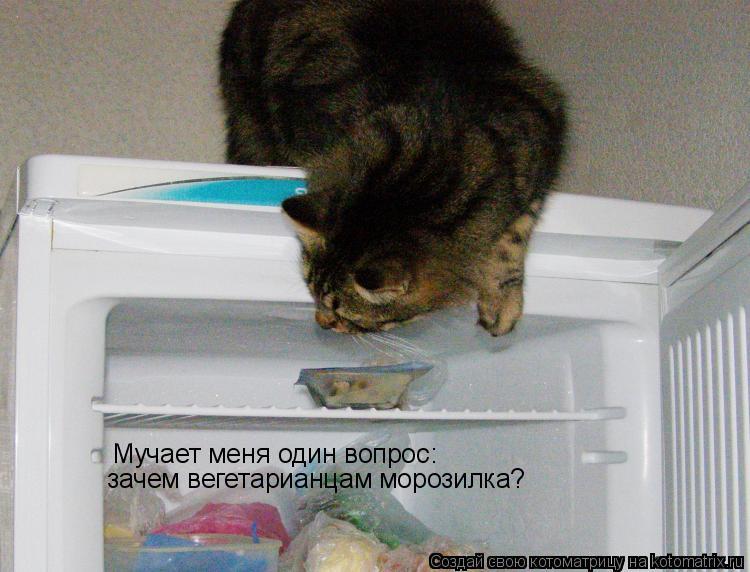 Котоматрица: Мучает меня один вопрос: зачем вегетарианцам морозилка?