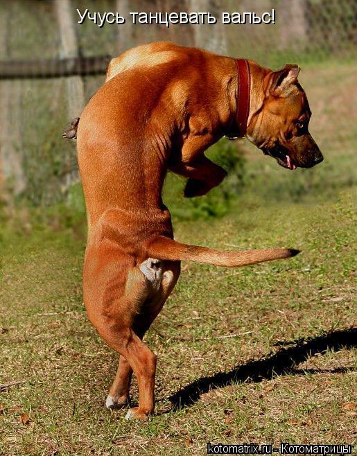 Котоматрица: Учусь танцевать вальс!