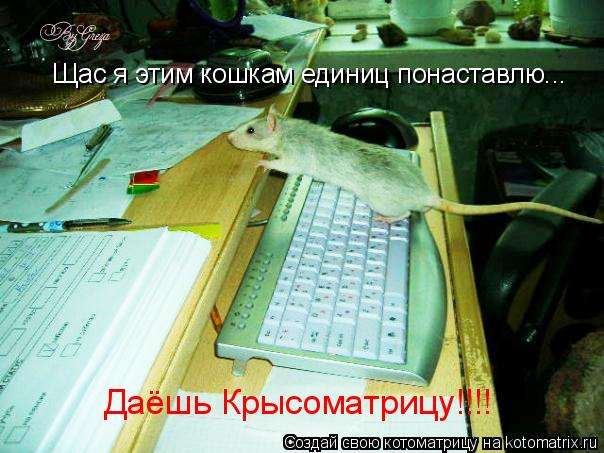 Котоматрица: Щас я этим кошкам единиц понаставлю... Даёшь Крысоматрицу!!!!