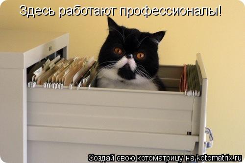 Котоматрица: Здесь работают профессионалы!