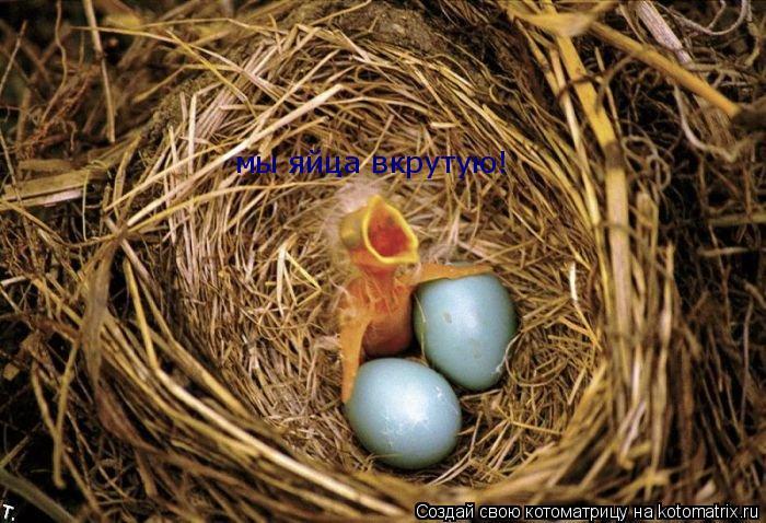 Котоматрица: мы яйца вкрутую!