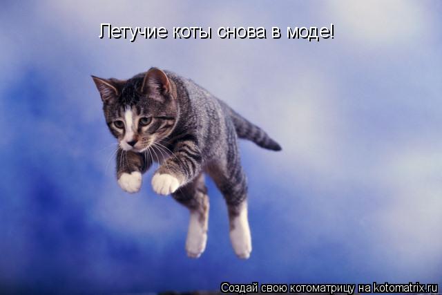 Котоматрица: Летучие коты снова в моде!