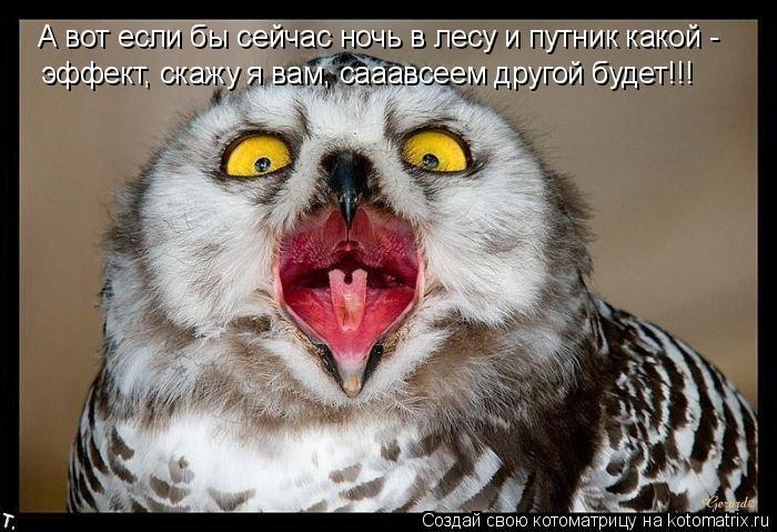 Котоматрица: А вот если бы сейчас ночь в лесу и путник какой -  эффект, скажу я вам, сааавсеем другой будет!!!