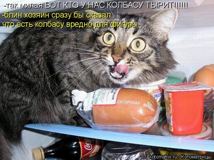Котоматрица: -так милая ВОТ КТО У НАС КОЛБАСУ ТЫРИТ!!!!!! -блин хозяин сразу бы сказал  что есть колбасу вредно для фигуры