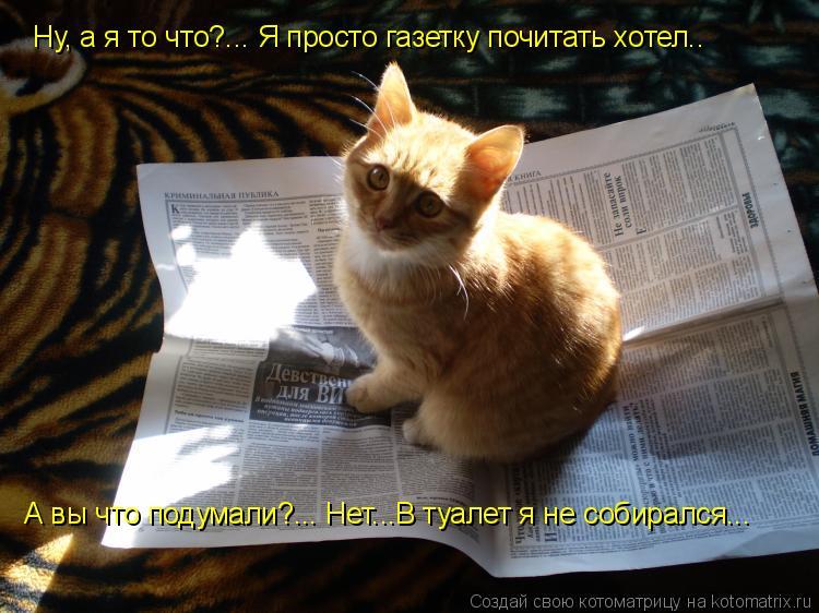 Котоматрица: Ну, а я то что?... Я просто газетку почитать хотел.. А вы что подумали?... Нет...В туалет я не собирался...