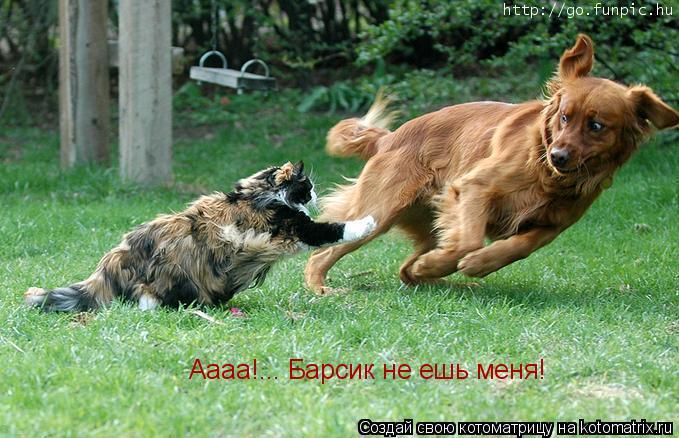 Котоматрица: Аааа!... Барсик не ешь меня!