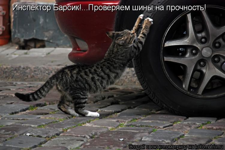 Котоматрица: Инспектор Барсик!...Проверяем шины на прочность!