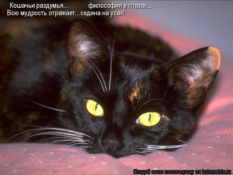 Котоматрица: Кошачьи раздумья... философия в глазах... Всю мудрость отражает...седина на усах!