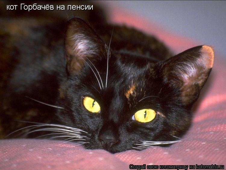 Котоматрица: кот Горбачёв на пенсии