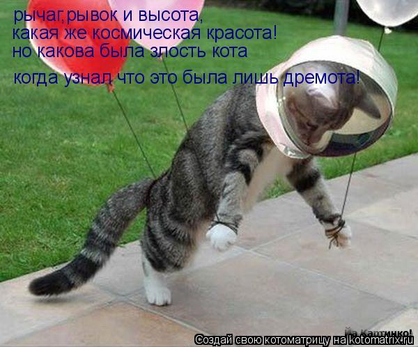 Котоматрица: рычаг,рывок и красота рычаг,рывок и высота, какая же космическая красота! но какова была злость кота когда узнал что это была лишь дремота!