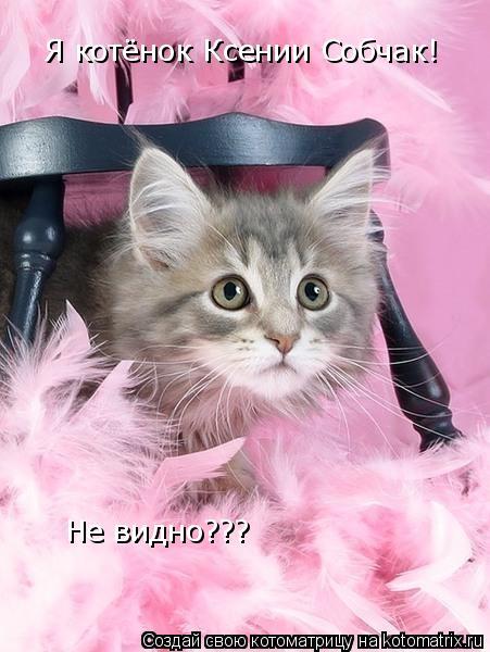 Котоматрица: Я котёнок Ксении Собчак! Не видно???