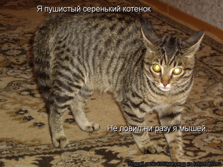 Котоматрица: Я пушистый серенький котенок Не ловил ни разу я мышей...