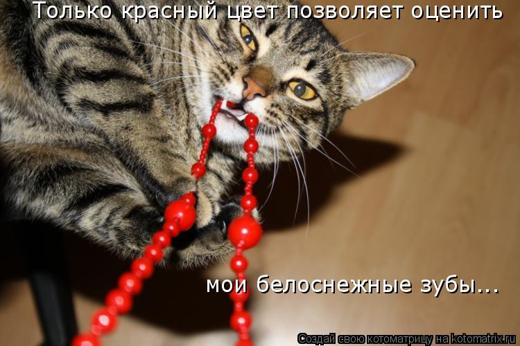 Котоматрица: Только красный цвет позволяет оценить мои белоснежные зубы...