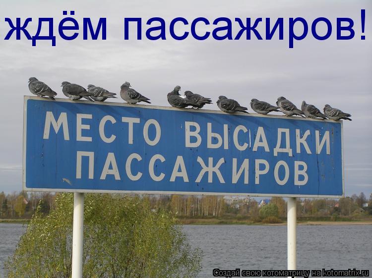 Котоматрица: ждём пассажиров!