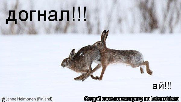 Котоматрица: догнал!!! ай!!!