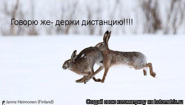 Котоматрица: Говорю же- держи дистанцию!!!!