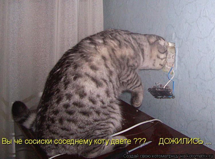 Котоматрица: Вы чё сосиски соседнему коту даёте ???      ДОЖИЛИСЬ ... Вы чё сосиски соседнему коту даёте ???      ДОЖИЛИСЬ ...