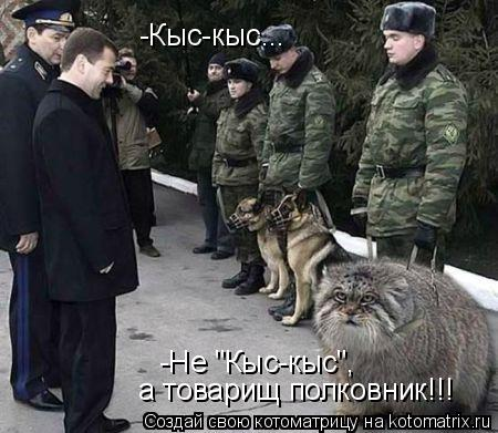 "Котоматрица: -Кыс-кыс... -Не ""Кыс-кыс"",  а товарищ полковник!!!"