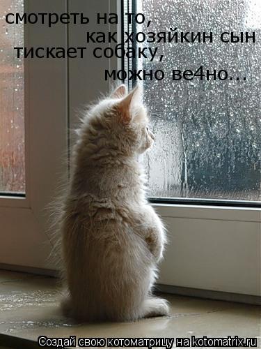 Котоматрица: смотреть на то, как хозяйкин сын тискает собаку, можно ве4но...