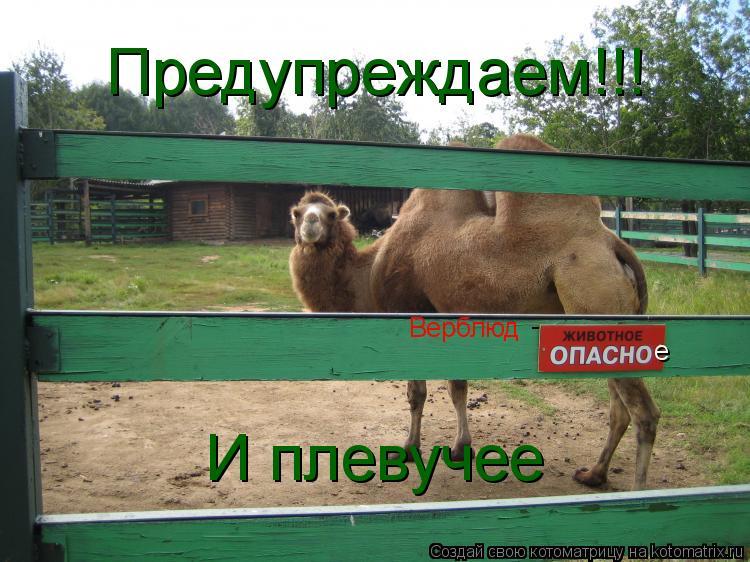 Котоматрица: Верблюд  -  е И плевучее Предупреждаем!!!