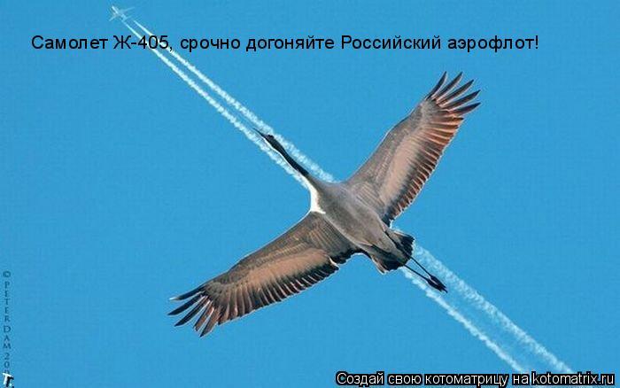 Котоматрица: Самолет Ж-405, срочно догоняйте Российский аэрофлот!