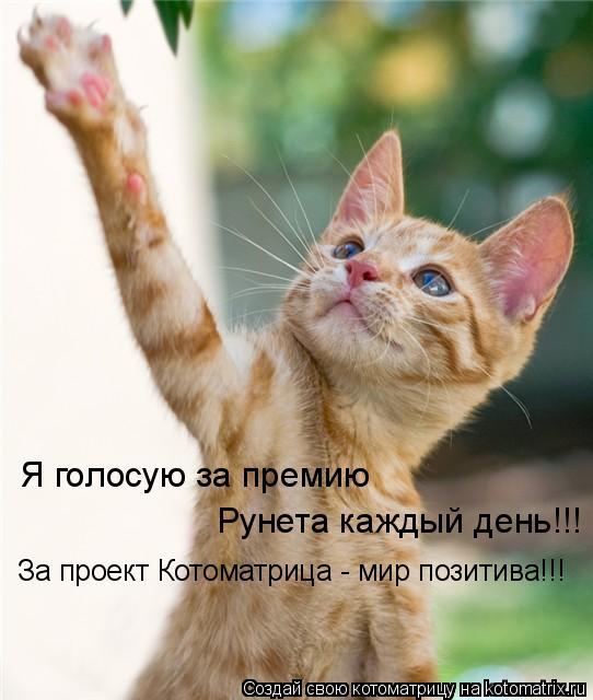 Котоматрица: Я голосую за премию Рунета каждый день!!! За проект Котоматрица - мир позитива!!!
