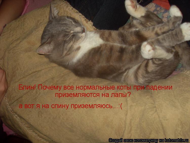 Котоматрица: Блин! Почему все нормальные коты при падении приземляются на лапы? а вот я на спину приземляюсь...:(