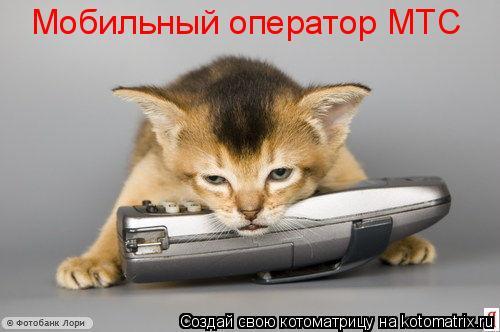 Котоматрица: Мобильный оператор МТС
