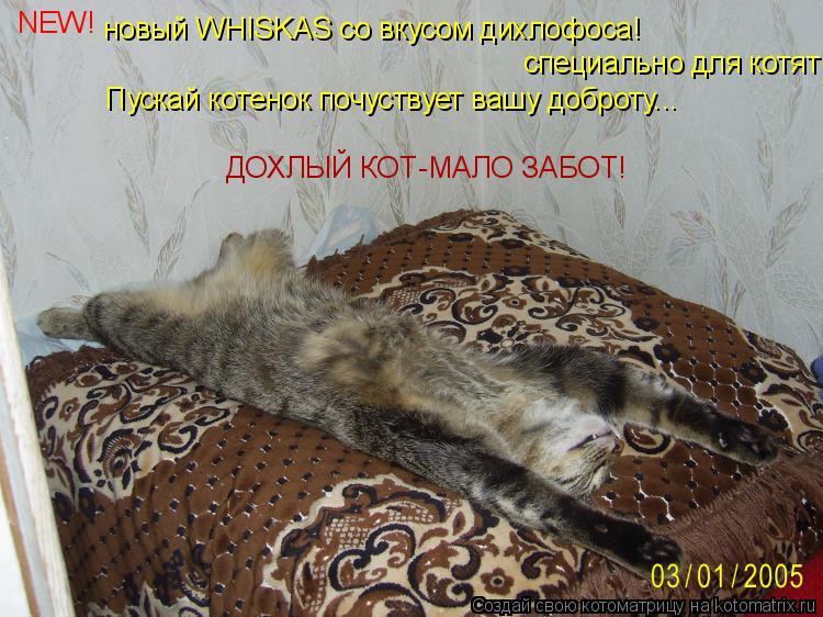 Котоматрица: новый WHISKAS со вкусом дихлофоса! специально для котят! Пускай котенок почуствует вашу доброту... ДОХЛЫЙ КОТ-МАЛО ЗАБОТ! NEW!
