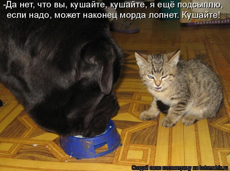 Котоматрица: -Да нет, что вы, кушайте, кушайте, я ещё подсыплю,  если надо, может наконец морда лопнет. Кушайте!