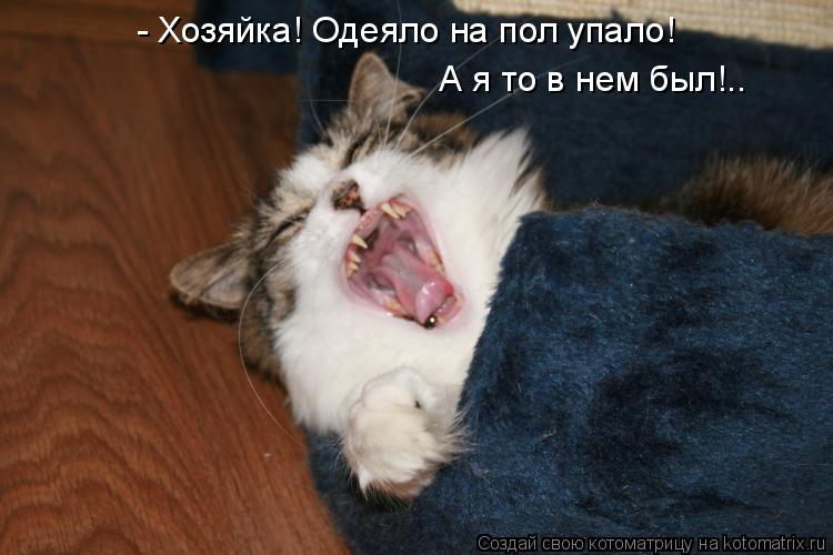Котоматрица: - Хозяйка! Одеяло на пол упало! А я то в нем был!..