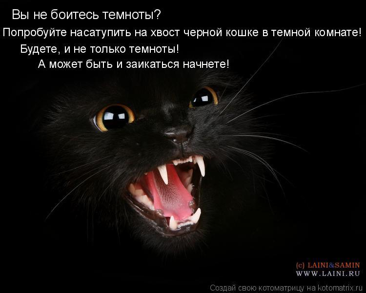 Котоматрица: Вы не боитесь темноты? Попробуйте насатупить на хвост черной кошке в темной комнате! Будете, и не только темноты! А может быть и заикаться на