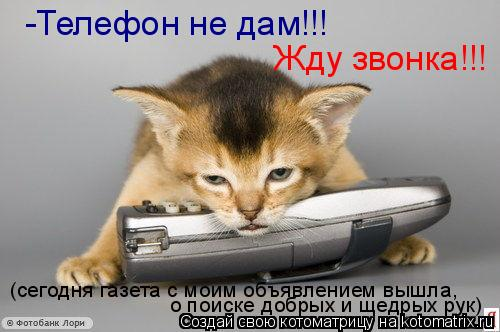 Котоматрица: (сегодня газета с моим объявлением вышла, о поиске добрых и щедрых рук) -Телефон не дам!!! Жду звонка!!!
