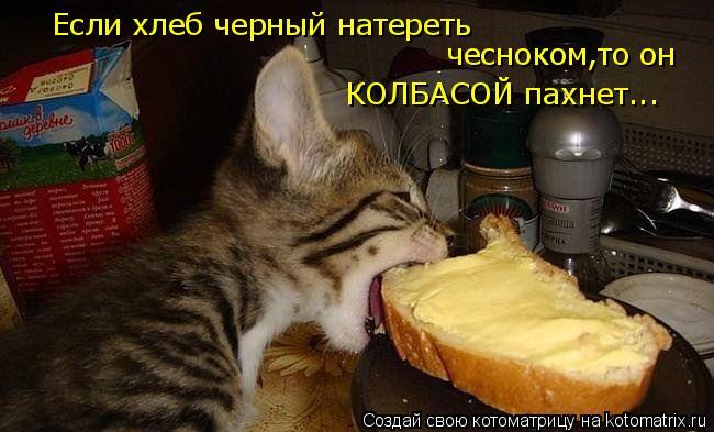 Котоматрица: Если хлеб черный натереть  чесноком,то он КОЛБАСОЙ пахнет...