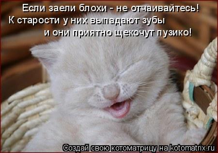 Котоматрица: К старости у них выпадают зубы Если заели блохи - не отчаивайтесь! и они приятно щекочут пузико!