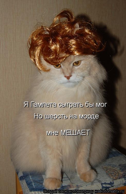 Котоматрица: Я Гамлета сыграть бы мог Но шерсть на морде мне МЕШАЕТ